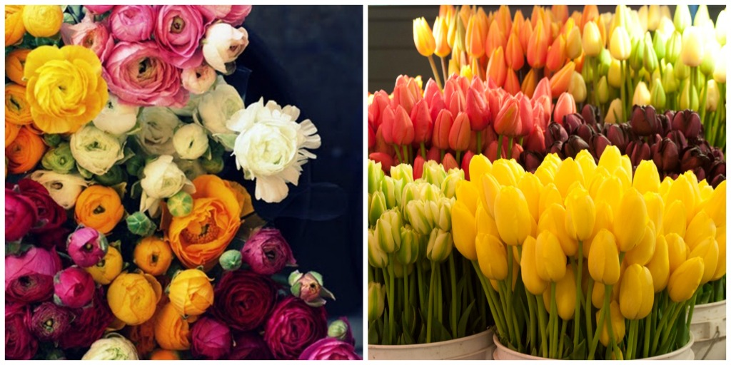 Ranunculus and Tulips Collage