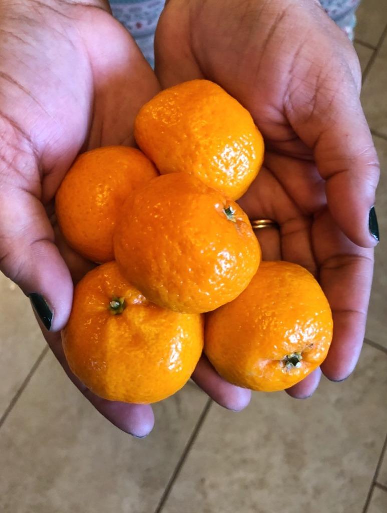 Mimosa Cranberry sauce (citrus)